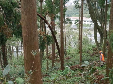台風被害処理はシジフォスの神話?:10・21六国見山手入れ_c0014967_20351821.jpg
