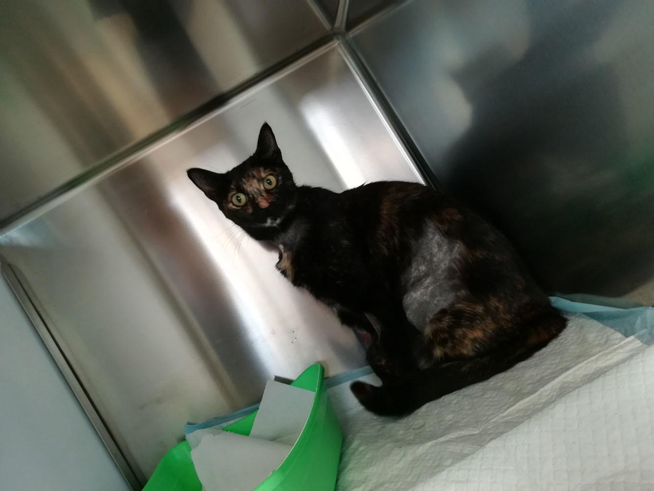 お隣の猫(ほぼ我が家の猫)のカミッラちゃんの緊急手術_c0179785_05142717.jpg