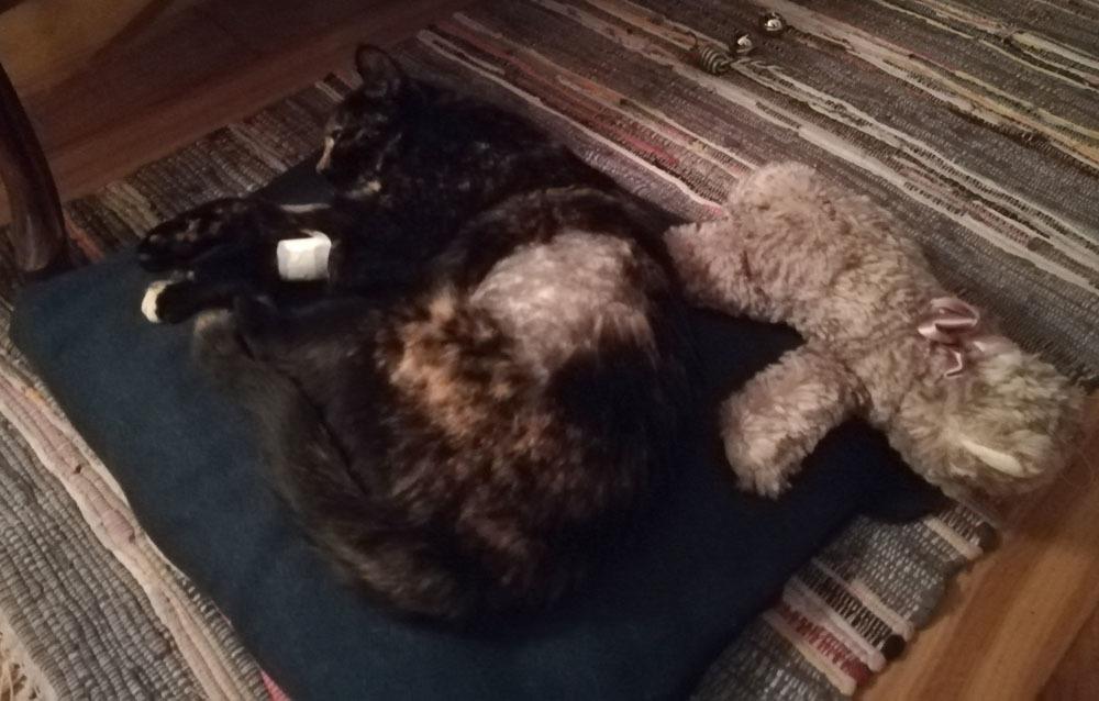 お隣の猫(ほぼ我が家の猫)のカミッラちゃんの緊急手術_c0179785_05153087.jpg