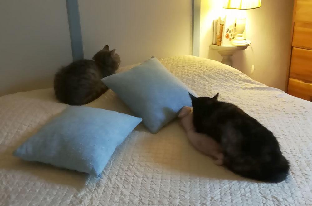 お隣の猫(ほぼ我が家の猫)のカミッラちゃんの緊急手術_c0179785_05251336.jpg