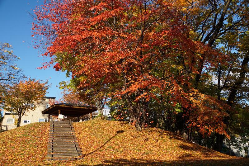 平和みどり緑地の紅葉_d0162994_12561610.jpg