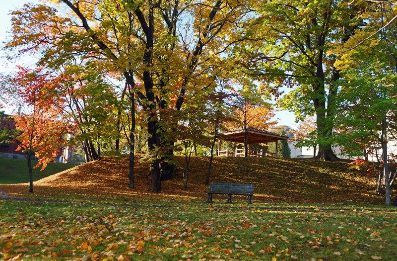平和みどり緑地の紅葉_d0162994_12563509.jpg