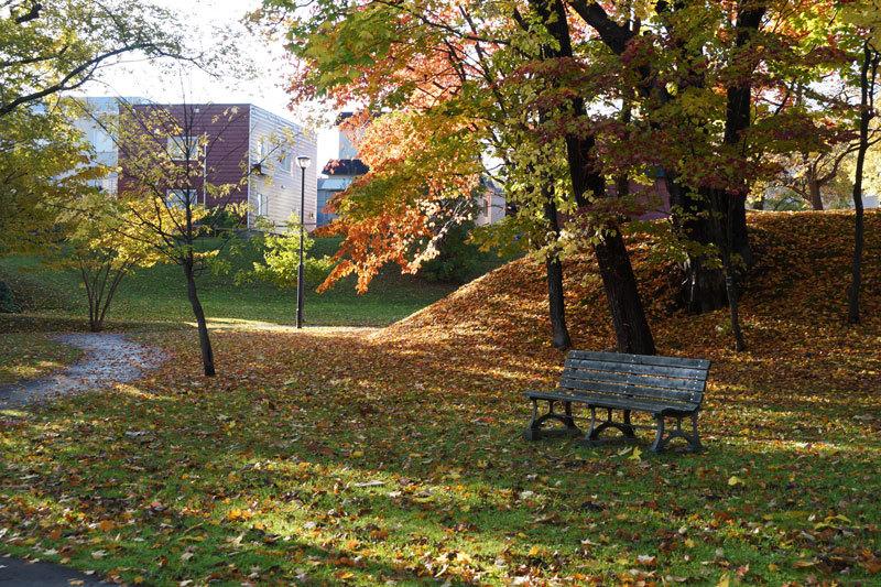 平和みどり緑地の紅葉_d0162994_12580580.jpg