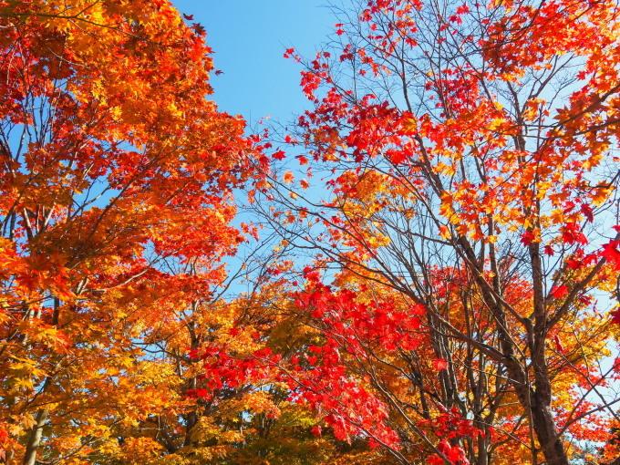 秋晴れの農村風景と紅色がきれいな「美術村庭園」の紅葉。_f0276498_22253271.jpg