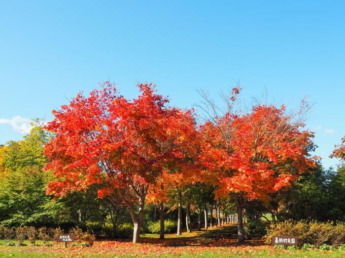 秋晴れの農村風景と紅色がきれいな「美術村庭園」の紅葉。_f0276498_22290347.jpg
