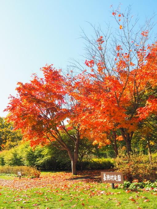 秋晴れの農村風景と紅色がきれいな「美術村庭園」の紅葉。_f0276498_22293573.jpg