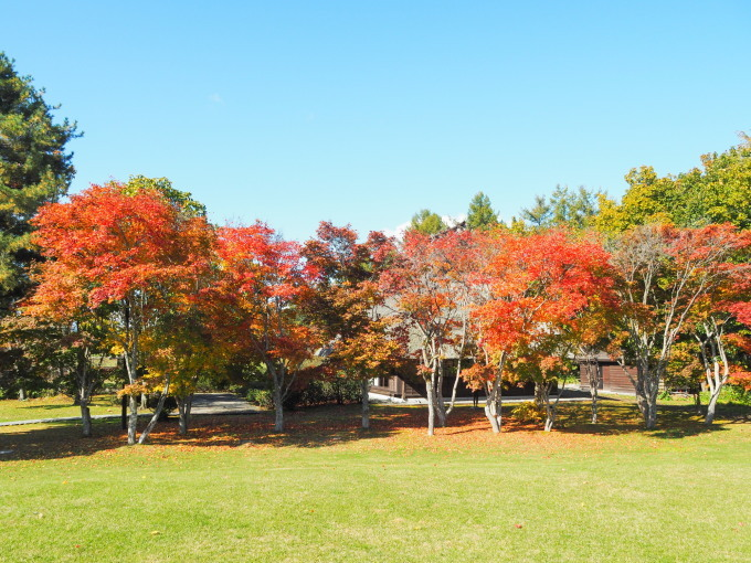 秋晴れの農村風景と紅色がきれいな「美術村庭園」の紅葉。_f0276498_22301229.jpg