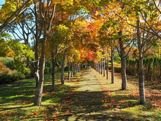 秋晴れの農村風景と紅色がきれいな「美術村庭園」の紅葉。_f0276498_22320401.jpg