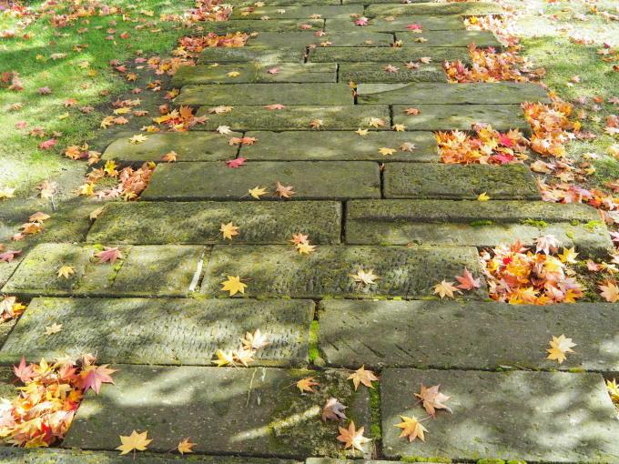 秋晴れの農村風景と紅色がきれいな「美術村庭園」の紅葉。_f0276498_22331479.jpg