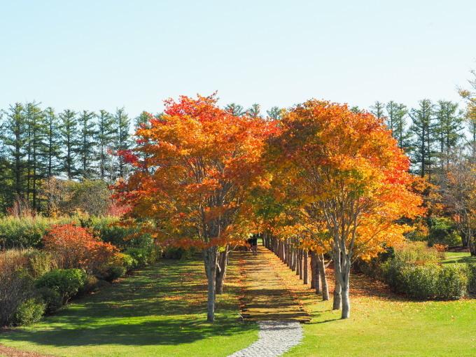 秋晴れの農村風景と紅色がきれいな「美術村庭園」の紅葉。_f0276498_22340312.jpg