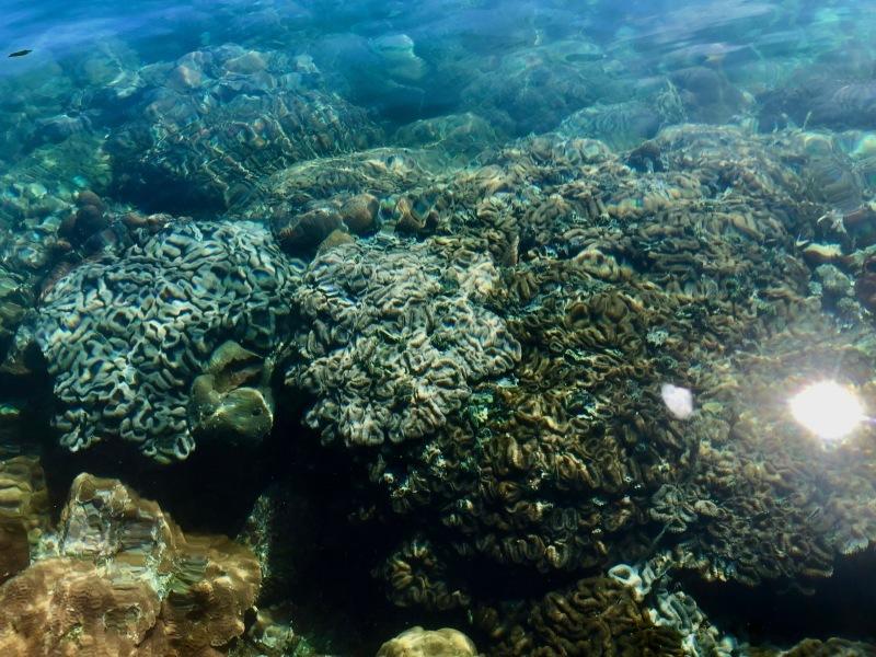Palau_c0006305_17210592.jpeg