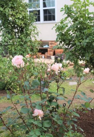 秋の方が美しく咲くバラ(*^^*)_e0341606_10520251.jpg