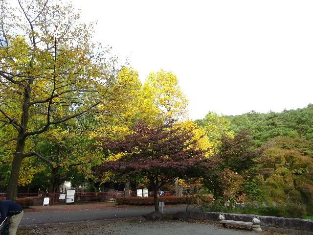 秋の盛岡の様子_f0105112_05475561.jpg