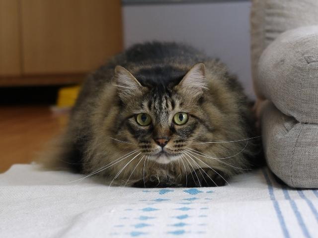 猫のお留守番 諭吉くん編。_a0143140_22360725.jpg