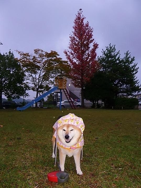 また雨だす_b0314043_07422973.jpg