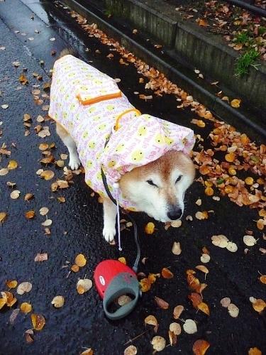 また雨だす_b0314043_07424077.jpg
