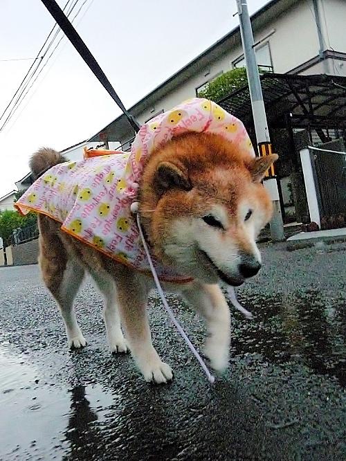 また雨だす_b0314043_07425477.jpg