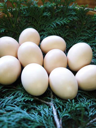 熊本県菊池水源で育った烏骨鶏の新鮮タマゴ!数量限定で販売中!ただし、やむなく値上げしました_a0254656_17260227.jpg