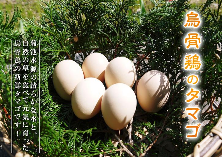 熊本県菊池水源で育った烏骨鶏の新鮮タマゴ!数量限定で販売中!ただし、やむなく値上げしました_a0254656_17343740.jpg