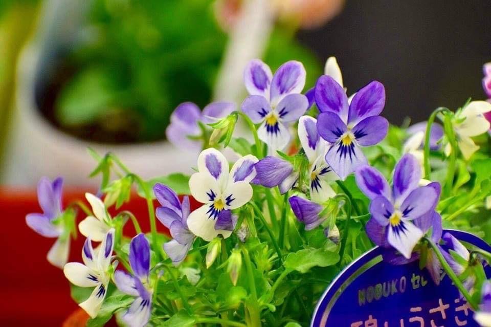 趣味の園芸テキスト11月号早速買いました😊_b0137969_07132707.jpeg