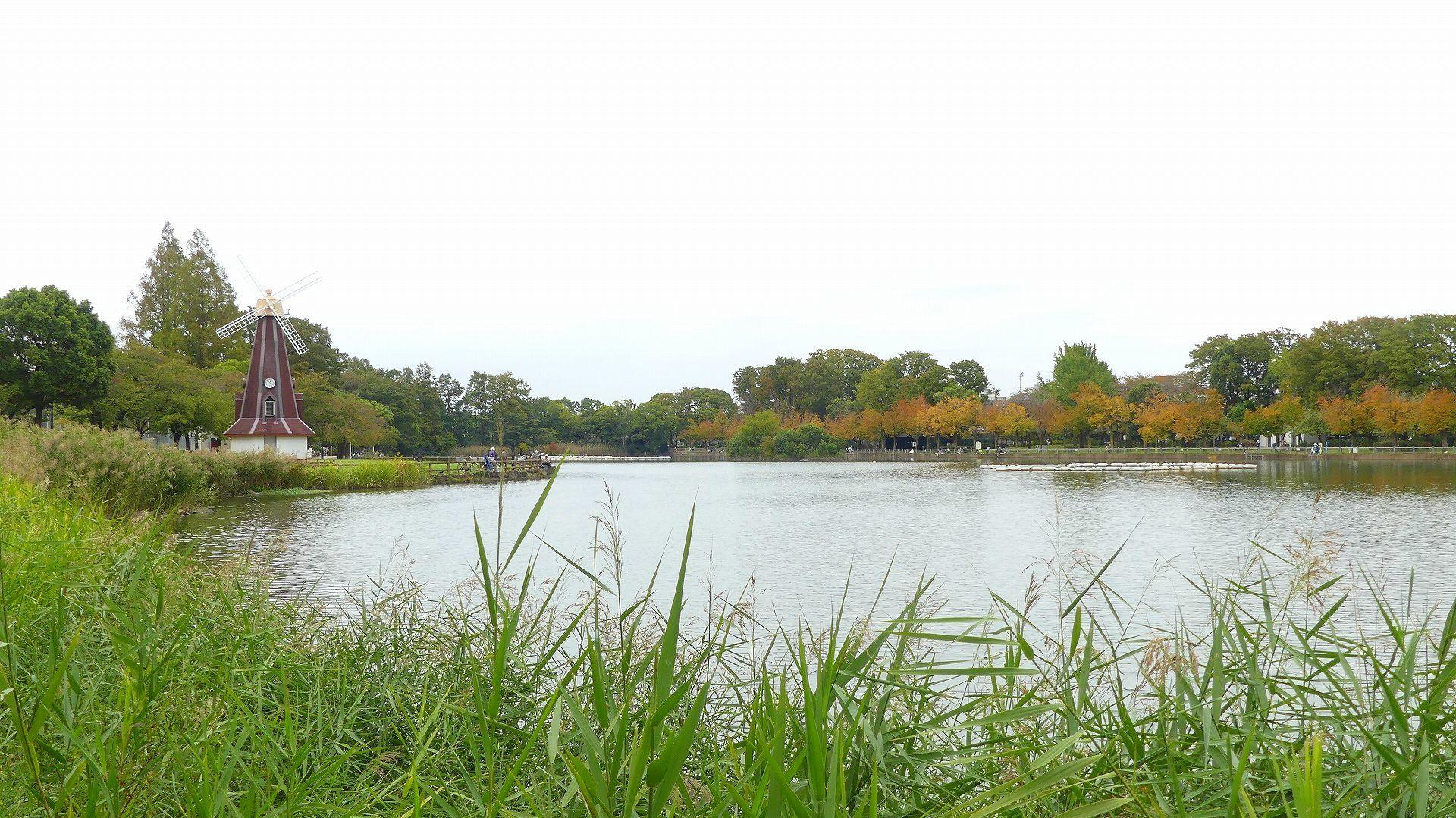 鴨池に秋が来た 【 2019 10/24(木) 】_a0185081_14571968.jpg