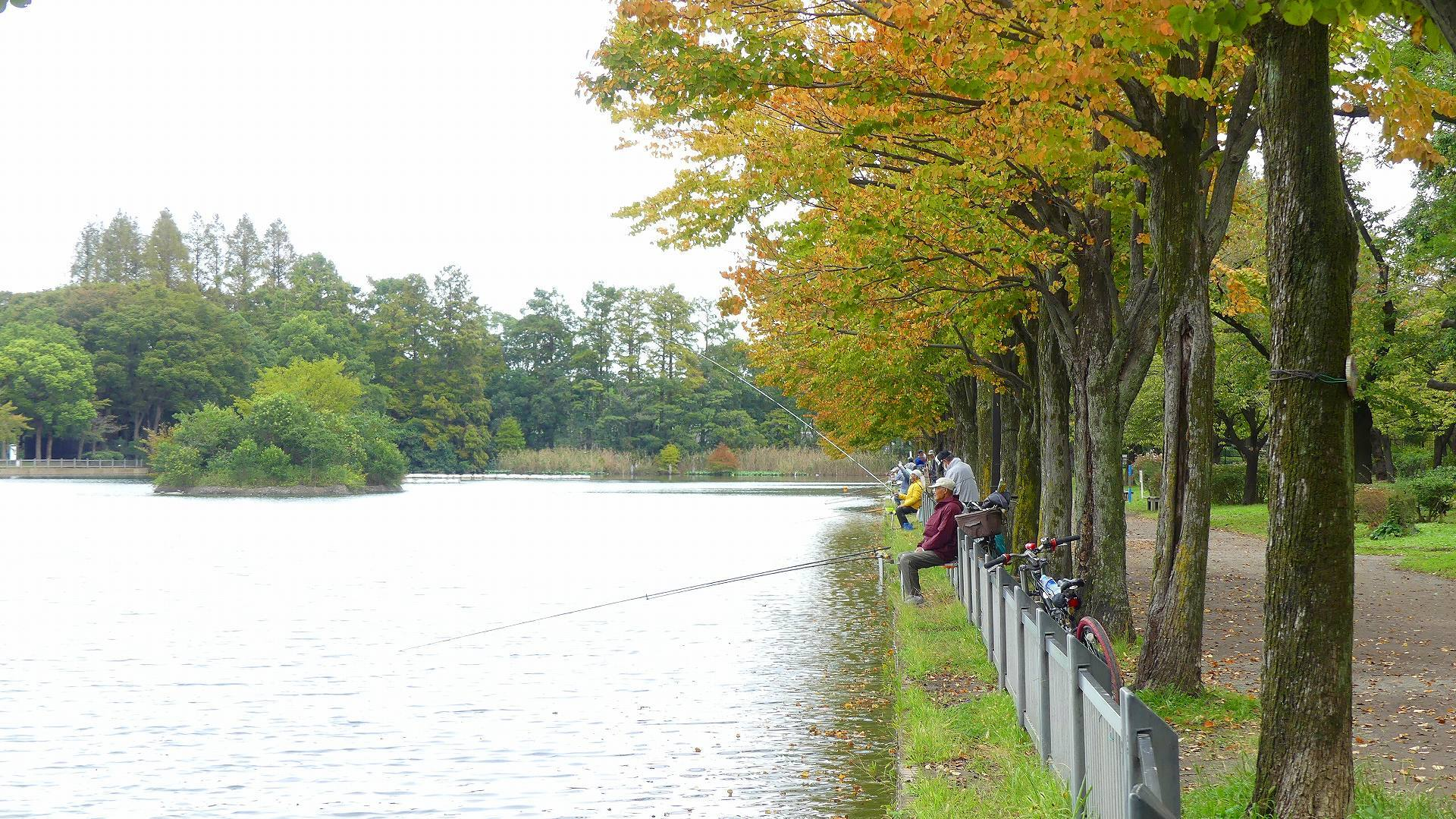鴨池に秋が来た 【 2019 10/24(木) 】_a0185081_15000069.jpg