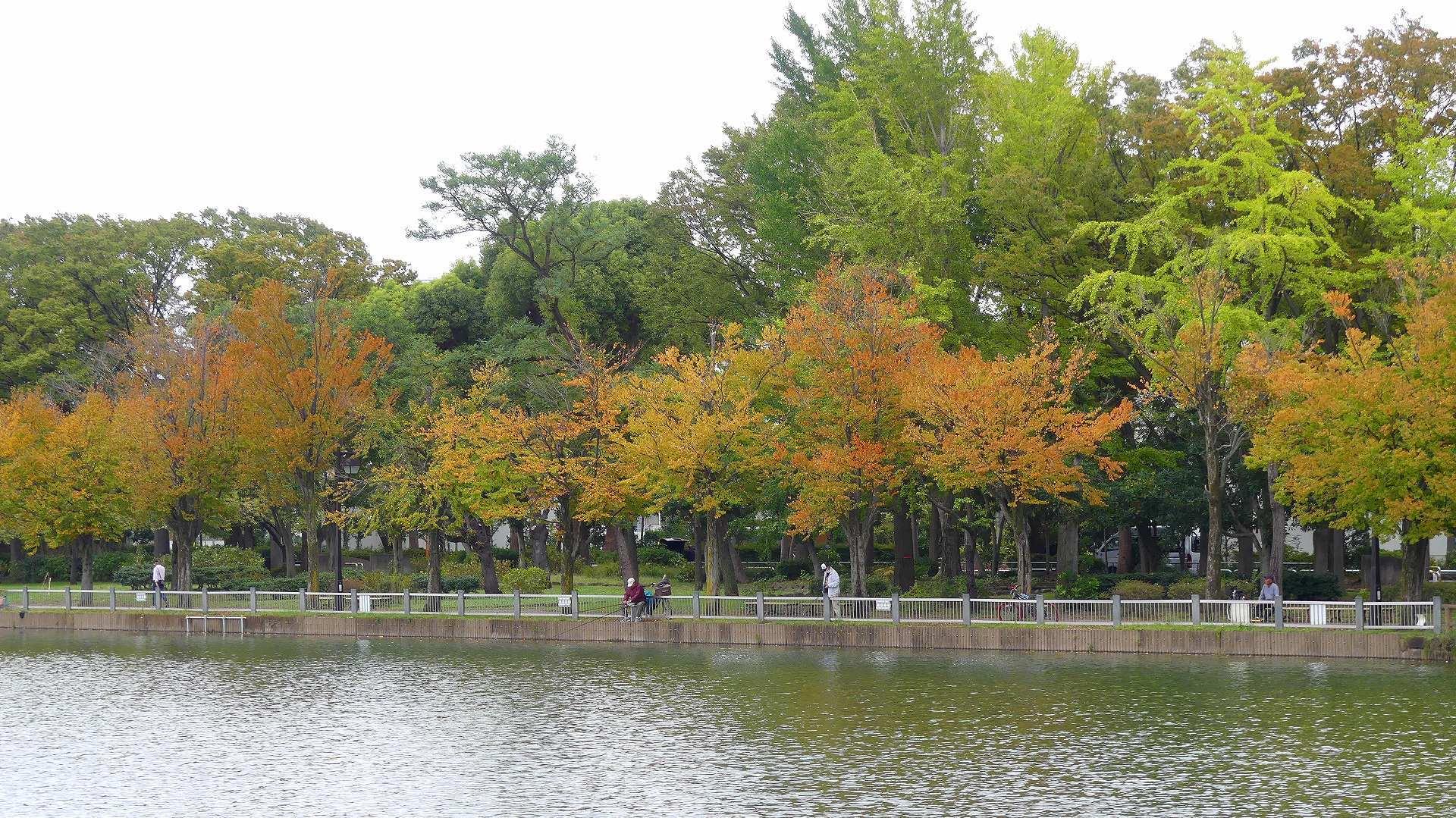 鴨池に秋が来た 【 2019 10/24(木) 】_a0185081_15022808.jpg