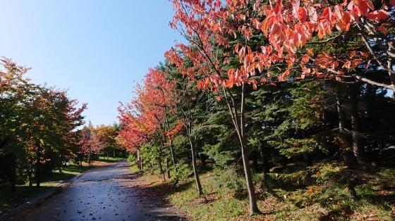 川下公園でノルディック、秋晴れのもと終了^-^!_d0198793_14011833.jpg