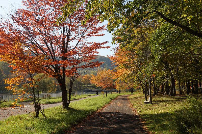 発寒川沿いの散歩道_d0162994_09504418.jpg