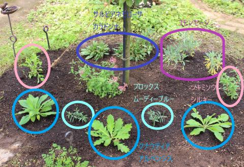 届いた苗を植えまくり=3_e0341606_14062697.png
