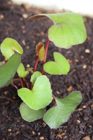 届いた苗を植えまくり=3_e0341606_14065538.jpg