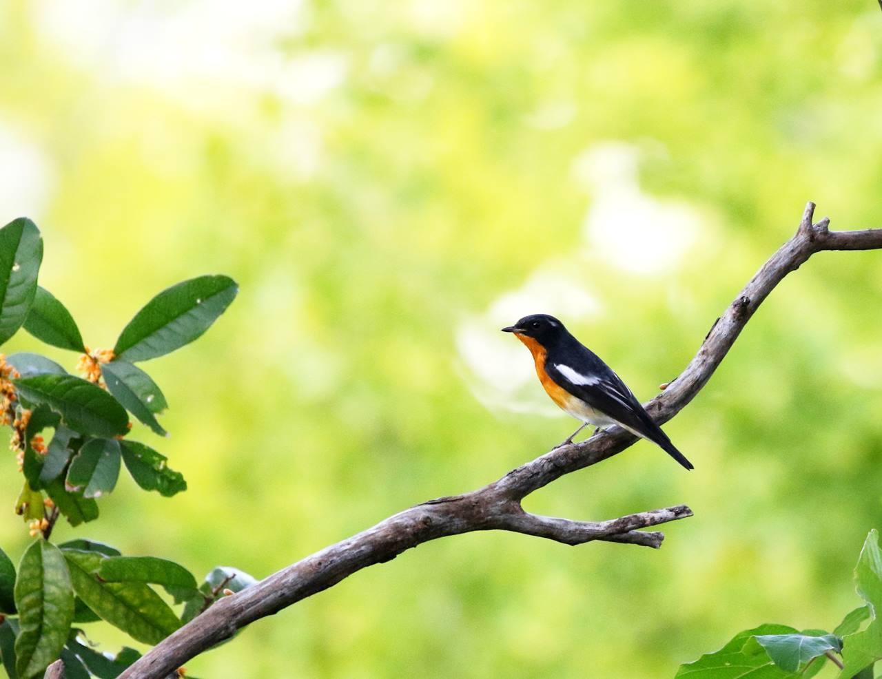 やっとムギマキ♂成鳥に出会う(その1)_c0213607_22355996.jpg