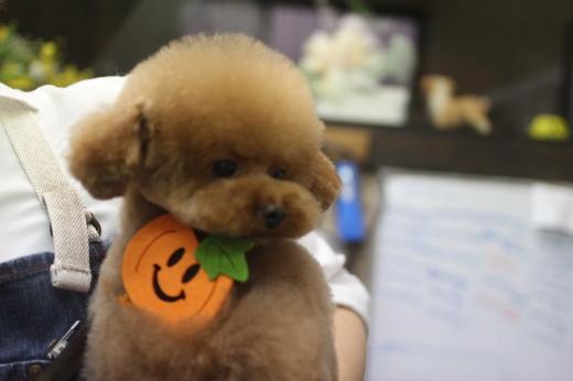 10月20日前半にご来店のワンちゃんです!!_b0130018_09502323.jpg
