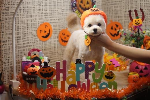 10月20日前半にご来店のワンちゃんです!!_b0130018_09525587.jpg