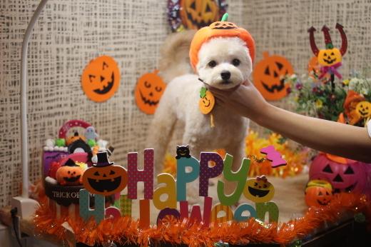 10月20日前半にご来店のワンちゃんです!!_b0130018_09530410.jpg