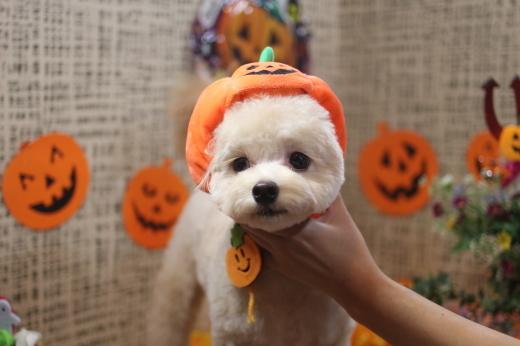 10月20日前半にご来店のワンちゃんです!!_b0130018_09531337.jpg