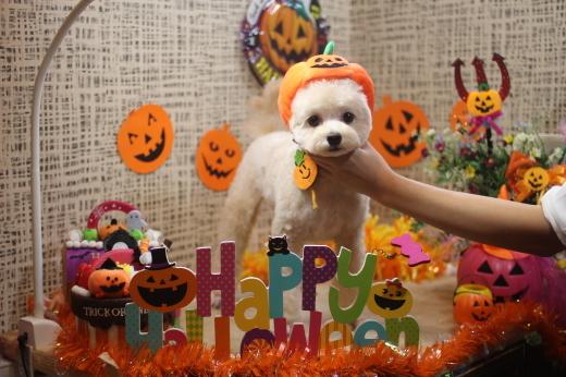 10月20日前半にご来店のワンちゃんです!!_b0130018_09532278.jpg