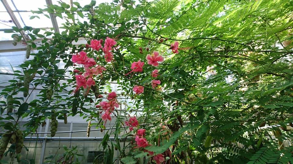 東山動植物園へ行ってきました♪_f0373339_15093147.jpg
