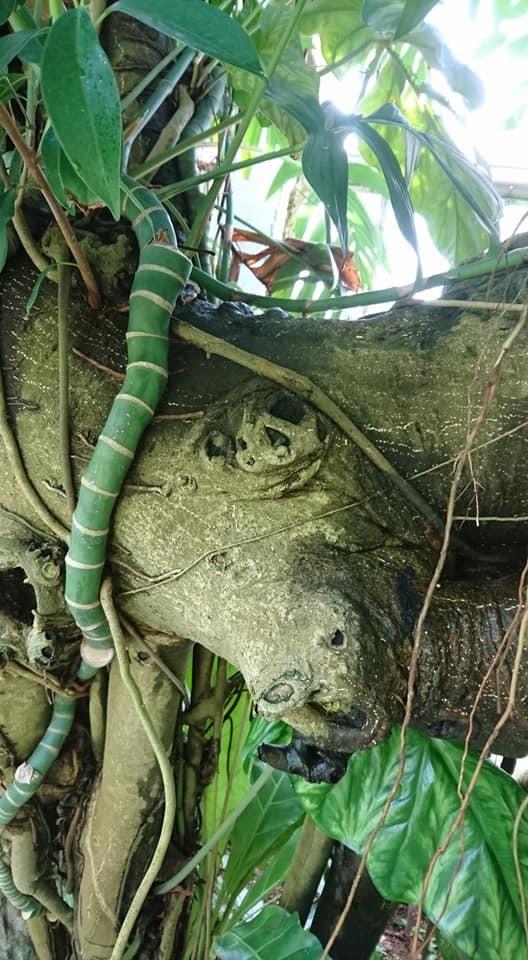 東山動植物園へ行ってきました♪_f0373339_15115387.jpg