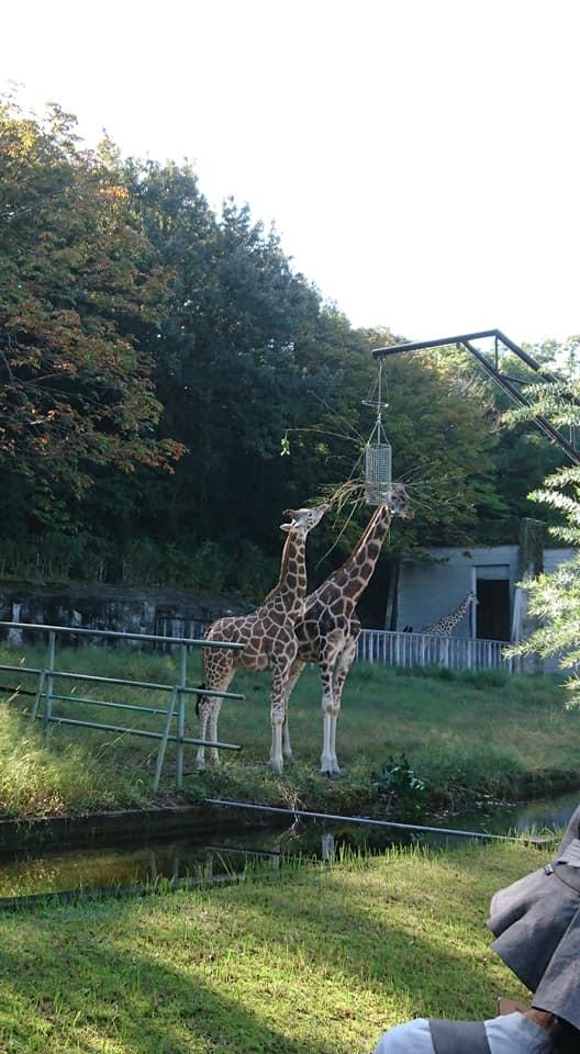 東山動植物園へ行ってきました♪_f0373339_15284222.jpg
