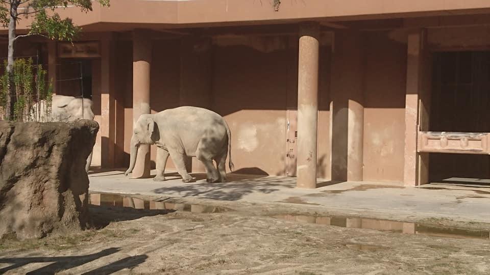 東山動植物園へ行ってきました♪_f0373339_15284346.jpg