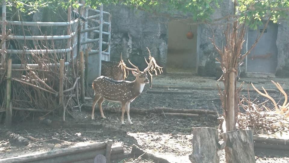 東山動植物園へ行ってきました♪_f0373339_15322602.jpg