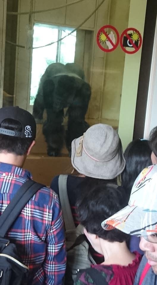 東山動植物園へ行ってきました♪_f0373339_15322646.jpg