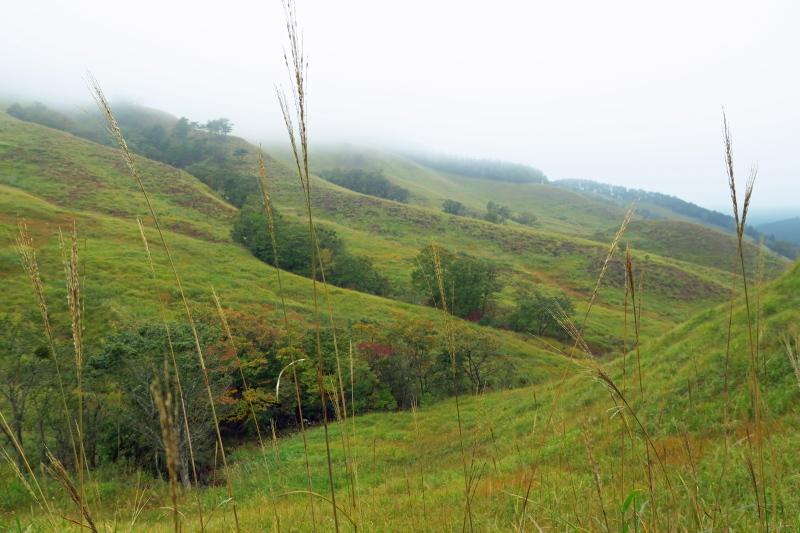 砥峰高原 ススキの高原とリラクシアの森を歩こう_c0218841_13343546.jpg