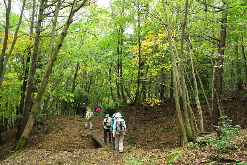 砥峰高原 ススキの高原とリラクシアの森を歩こう_c0218841_13363818.jpg