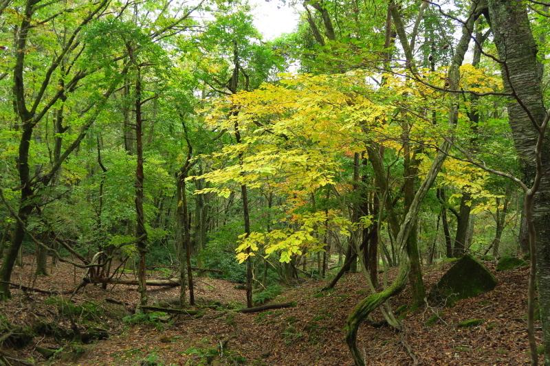 砥峰高原 ススキの高原とリラクシアの森を歩こう_c0218841_13365486.jpg