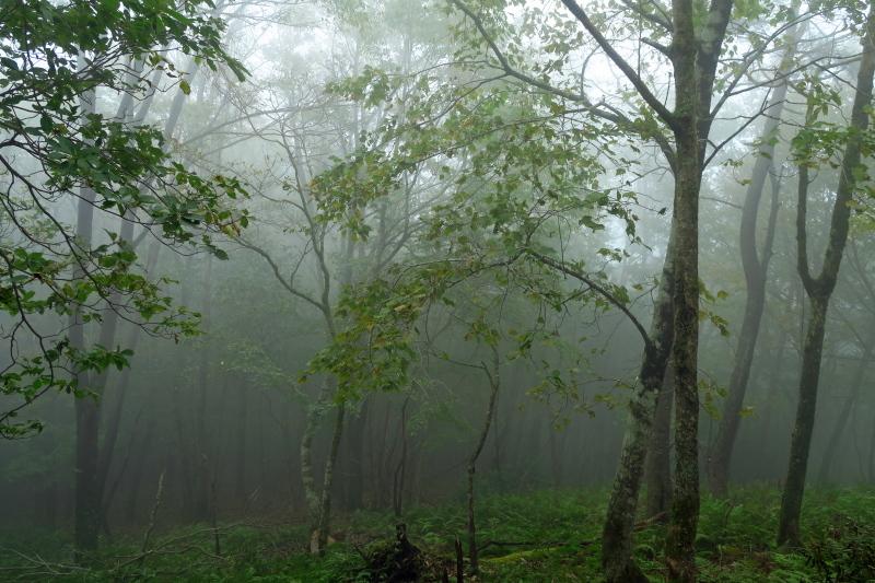 砥峰高原 ススキの高原とリラクシアの森を歩こう_c0218841_13582015.jpg
