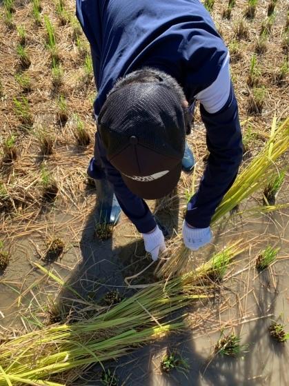 農作業 ファーマンしちゃいました😅_f0065444_10010084.jpeg
