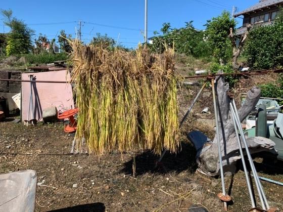 農作業 ファーマンしちゃいました😅_f0065444_10031817.jpeg