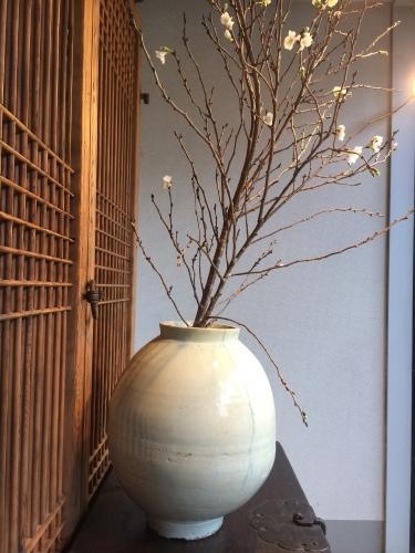 花だより 十月桜と白磁大壺_a0279848_13443078.jpeg